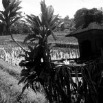 Veronique Thomazo Photographe photo noir et blanc